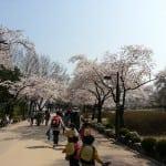 Grand Childrens' Park, Seoul